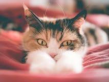 Liggande tafsar se för katt bak hans royaltyfri bild