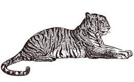liggande tiger Royaltyfri Foto