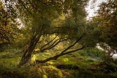 Liggande träd royaltyfri fotografi