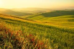 liggande tuscan Royaltyfria Bilder