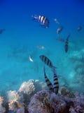 liggande under vatten royaltyfri foto