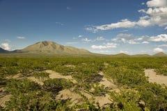 liggande västra texas Arkivfoto