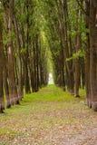 liggandelinje sommartree Royaltyfri Foto