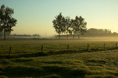 liggandemorgon Royaltyfri Bild
