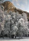 liggandenationalparkvinter yosemite royaltyfri bild
