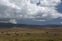 liggandengorongoro för 035 africa Arkivbilder