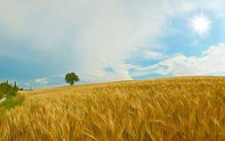 liggandepanorama tuscany Fotografering för Bildbyråer