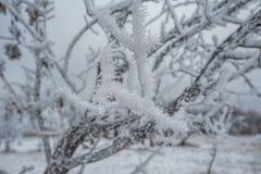 ligganderussia vinter Royaltyfria Foton