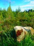 liggandetree royaltyfri fotografi