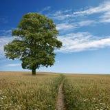 liggandetree Fotografering för Bildbyråer