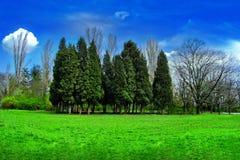 liggandetree Arkivfoto