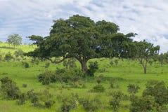 liggandetree Arkivbild