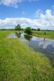 liggandevåtmarker Arkivfoton