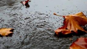 Liggen de esdoorn vergeelde bladeren op het asfalt in de regen HD 1280x720 stock videobeelden