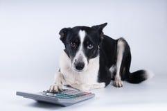 Liggend portret van hond met calculator Stock Fotografie