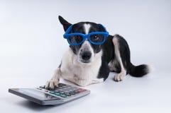 Liggend portret van hond met calculator royalty-vrije stock fotografie