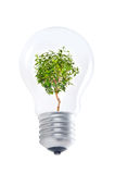 Ligh bulb Stock Photography