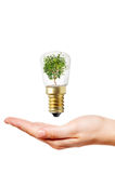 Ligh bulb and hand Stock Image