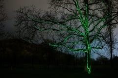 lighning触击的树螺栓 图库摄影