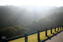 Light. Sunbeams shining into a canyon with trees Stock Images