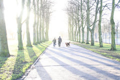 Into the Light. A couple walking through the woods with their dog stock photos