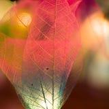 Light Abstract Royalty Free Stock Photo