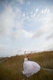 Light And Pure (bride Portrait) Stock Image