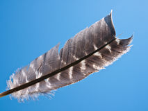 Light as a feather Royalty Free Stock Image