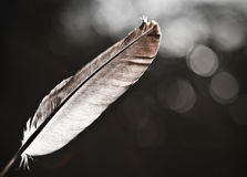 Light as a feather Royalty Free Stock Photo