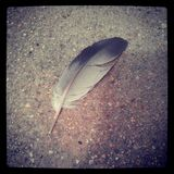 Light as a feather. One lonely feather in the middle of the side walk Royalty Free Stock Image