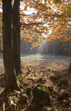 Light in autumn forest Stock Photography