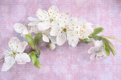 Light background with blossoming tree brunch. Royalty Free Stock Photography
