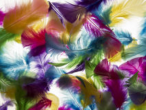 Light background feather Stock Photography