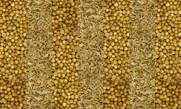 Light background fennel seeds dry and round seeds coriander straw background wide narrow stripes base pattern natural royalty free stock image