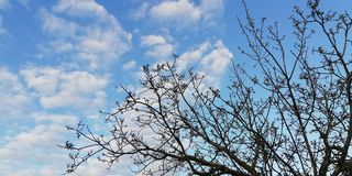 Light background. Lively lace. Dark tree branches contrast with white clouds and blue sky stock photos