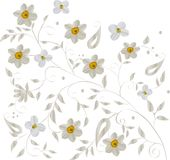 Light background with narcissus Stock Photos