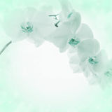 Light background with orchid flowers Royalty Free Stock Images