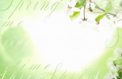 Light background with white flowers and green leave on a tree branch. Stock Photo