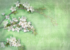 Light background with white flowers on a tree branch. stock image
