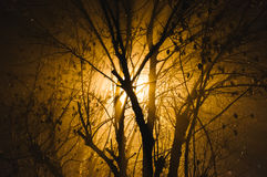 Light through bare branches royalty free stock image