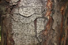 Light bark of a tree stock image
