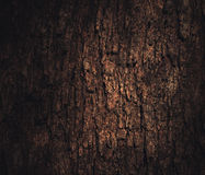 Light on the bark Royalty Free Stock Photo