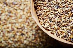 Light barley malt grains for beer production. Barley malt - Castel Malting of the type. Light barley malt grains for beer production. Barley malt - Castel stock images