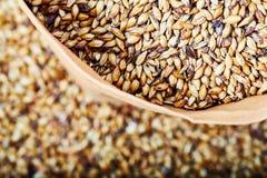 Light barley malt grains for beer production. Detaii stock image