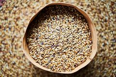 Light barley malt grains for beer production. In a leather bag stock photos
