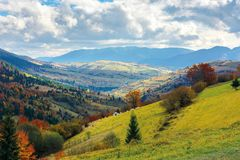 Light  beam falls on hillside with autumn forest i. Autumn landscape. village on the hillside. forest on the mountain covered with red and yellow leaves. over stock photography