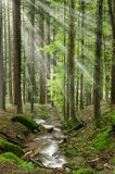 Light beam in the forest Royalty Free Stock Photos