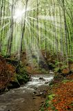 Light beam in the forest Royalty Free Stock Photography
