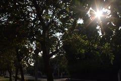 Light beam through tree branches Stock Photos