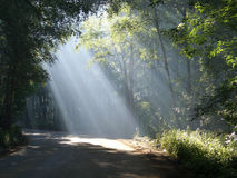 Light beams in a forest Royalty Free Stock Photography
